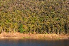 Λίμνη με τα ξηρά δέντρα στο βουνό το καλοκαίρι Στοκ Φωτογραφίες