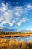 Λίμνη με την ξηρά κίτρινη χλόη Στοκ εικόνα με δικαίωμα ελεύθερης χρήσης