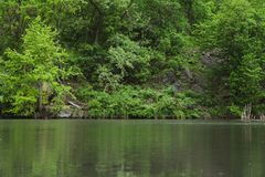 Λίμνη με την πολύβλαστη πρασινάδα στοκ φωτογραφίες