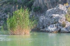 Λίμνη με τη χλόη καλάμων και το φυσικό υπόβαθρο βράχου Στοκ Φωτογραφίες