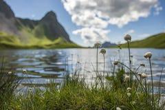 Λίμνη με τις βαμβάκι-όπως εγκαταστάσεις στοκ φωτογραφίες