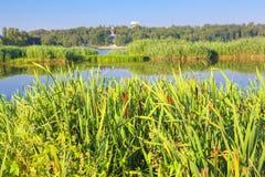 Λίμνη με τον πράσινο κάλαμο Στοκ Εικόνες