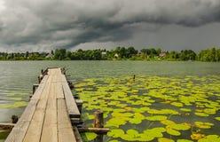 Λίμνη με τους κίτρινους λοβούς Στοκ φωτογραφία με δικαίωμα ελεύθερης χρήσης