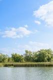 Λίμνη με τους καλάμους Στοκ Εικόνα