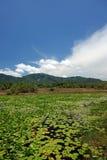 Λίμνη με τους κρίνους στοκ φωτογραφίες με δικαίωμα ελεύθερης χρήσης