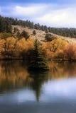 Λίμνη με το δέντρο Στοκ Εικόνες