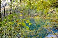 Λίμνη μπαμπού βελών, Jiuzhaigou, Κίνα στοκ φωτογραφίες