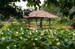 Λίμνη λουλουδιών Lotus Στοκ Φωτογραφίες