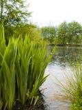 λίμνη πάρκων Στοκ Εικόνες