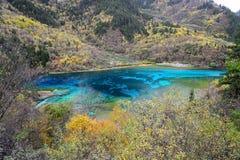 Λίμνη πέντε λουλουδιών, Jiuzhaigou στοκ εικόνα με δικαίωμα ελεύθερης χρήσης