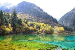 Λίμνη πέντε λουλουδιών, Jiuzhaigou στοκ φωτογραφία με δικαίωμα ελεύθερης χρήσης