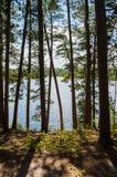 Λίμνη πέρα από τα δέντρα Στοκ Εικόνες