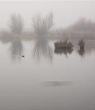 Λίμνη παπιών μια ομιχλώδη ημέρα Στοκ Φωτογραφίες