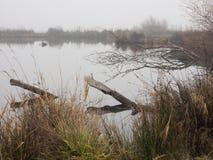 Λίμνη παπιών μια ομιχλώδη ημέρα Στοκ εικόνα με δικαίωμα ελεύθερης χρήσης