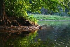 λίμνη παπιών Στοκ Εικόνες