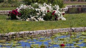 Λίμνη που καλύπτεται με τα μαξιλάρια κρίνων και τον ανθίζοντας θάμνο στο υπόβαθρο Στοκ φωτογραφία με δικαίωμα ελεύθερης χρήσης