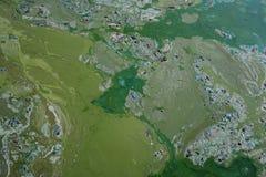 Λίμνη που καλύπτεται με τις παράξενες μορφές των αλγών Στοκ Φωτογραφία