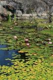 Λίμνη που καλύπτεται με τους κρίνους νερού στοκ εικόνες