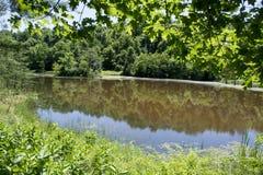 Λίμνη που πλαισιώνεται από τα φύλλα Στοκ Φωτογραφίες