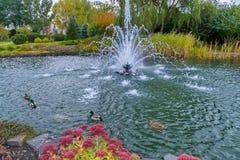 Λίμνη που τεντώνεται μεταξύ των θαυμάσιων κρεβατιών λουλουδιών και των παπιών που επιπλέουν γύρω από την πηγή στη μέση της λίμνης Στοκ εικόνες με δικαίωμα ελεύθερης χρήσης