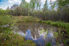 Λίμνη σε ένα δάσος σημύδων το καλοκαίρι Στοκ φωτογραφία με δικαίωμα ελεύθερης χρήσης