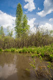 Λίμνη σε ένα δάσος σημύδων το καλοκαίρι Στοκ εικόνα με δικαίωμα ελεύθερης χρήσης