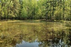 Λίμνη σε Kuskovo Στοκ φωτογραφία με δικαίωμα ελεύθερης χρήσης