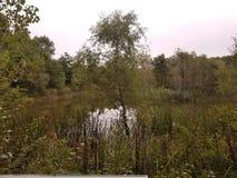 Λίμνη στα ξύλα στοκ φωτογραφία