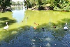 Λίμνη στεπών Στοκ φωτογραφίες με δικαίωμα ελεύθερης χρήσης