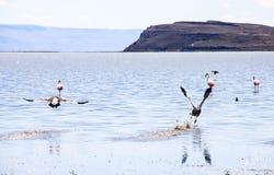 Λίμνη στη EL Calafate, Παταγωνία, Αργεντινή Στοκ Εικόνες