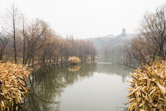 Λίμνη στον κήπο Στοκ φωτογραφία με δικαίωμα ελεύθερης χρήσης