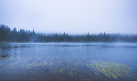 Λίμνη στο δάσος με πολλή ομίχλη Στοκ Εικόνα