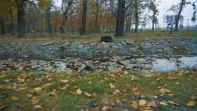 Λίμνη στο πάρκο φθινοπώρου, που καλύπτεται με τα πεσμένα φύλλα απόθεμα βίντεο