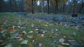 Λίμνη στο πάρκο φθινοπώρου, που καλύπτεται με τα πεσμένα φύλλα φιλμ μικρού μήκους