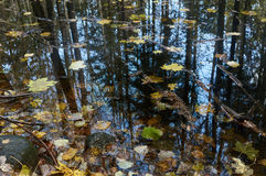 Λίμνη στο πυκνό δάσος Στοκ εικόνα με δικαίωμα ελεύθερης χρήσης