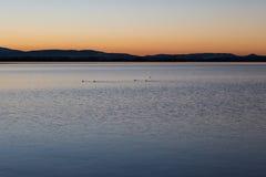 Λίμνη στο σούρουπο με τα πουλιά Στοκ εικόνες με δικαίωμα ελεύθερης χρήσης