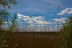 Λίμνη της Γαλλίας Στοκ Φωτογραφία