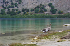 Λίμνη της Ελλάδας Στοκ εικόνες με δικαίωμα ελεύθερης χρήσης
