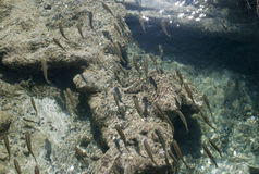 λίμνη της Κροατίας Στοκ φωτογραφία με δικαίωμα ελεύθερης χρήσης