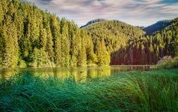 Λίμνη τοπίων Η λίμνη στη δασική δασική λίμνη πολυόροφων κτιρίων νερό σε μια δασική λίμνη με τα δέντρα πεύκων Στοκ φωτογραφία με δικαίωμα ελεύθερης χρήσης