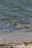 Λίμνη τοπίων με τα άλγη Στοκ εικόνες με δικαίωμα ελεύθερης χρήσης