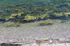 Λίμνη τοπίων με τα άλγη Στοκ φωτογραφία με δικαίωμα ελεύθερης χρήσης