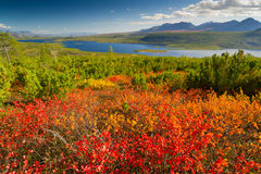 Λίμνη του Λονδίνου γρύλων Στοκ εικόνα με δικαίωμα ελεύθερης χρήσης