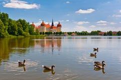Λίμνη του Castle Moritzburg Στοκ φωτογραφίες με δικαίωμα ελεύθερης χρήσης