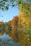 Λίμνη το φθινόπωρο, κίτρινα φύλλα, κίτρινη ξύλινη λίμνη φθινοπώρου αντανάκλασης Στοκ Εικόνες