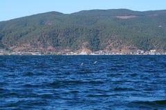 Λίμνη το φθινόπωρο με τα πουλιά Στοκ Εικόνες