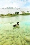 Λίμνη τραβερτινών Στοκ φωτογραφία με δικαίωμα ελεύθερης χρήσης