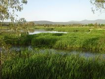Λίμνη Τόνγκα, Αλγερία στοκ εικόνα