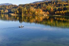 Λίμνη φθινοπώρου Λίμνη Reintaler, Tirol, Αυστρία Στοκ εικόνες με δικαίωμα ελεύθερης χρήσης