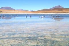 λίμνη φλαμίγκο των Άνδεων Στοκ εικόνες με δικαίωμα ελεύθερης χρήσης